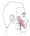 Super-Innervation of a Free Latissimus Dorsi Flap in Facial Reanimation: A Novel Strategy for Supplementing Muscle Innervation